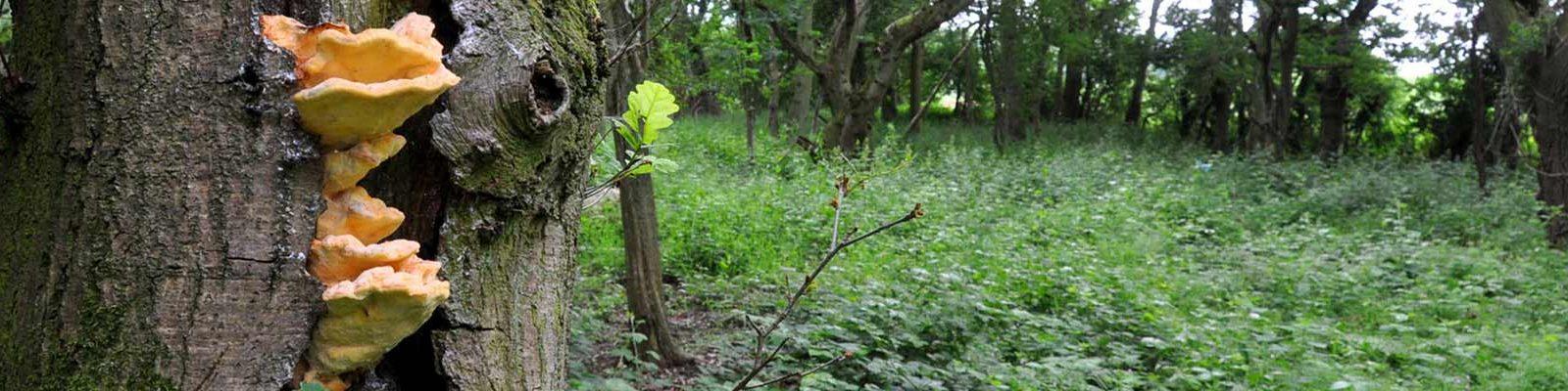fungi-on-tree