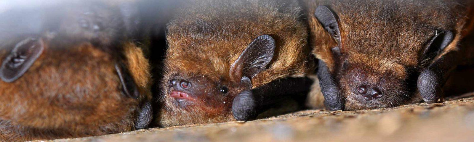 Bat-surveys