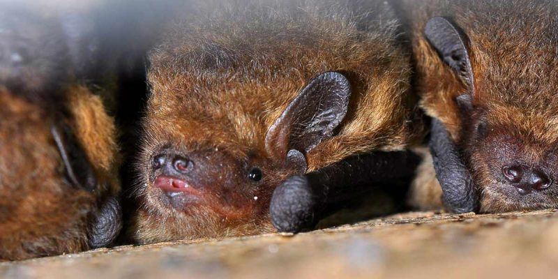 Bat surveys & Assessments