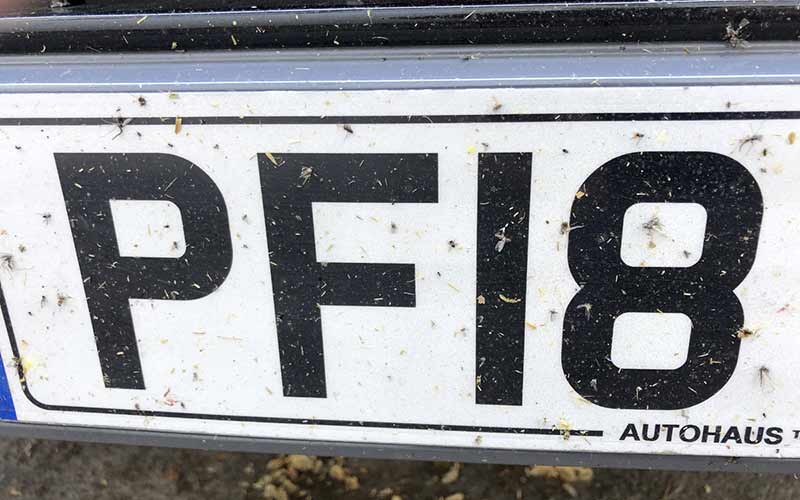 Insects on Number Plate