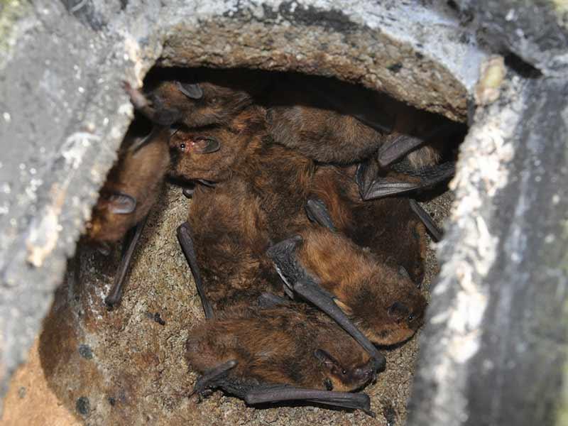 Lanky Bats