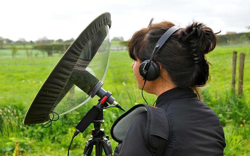 listening to bird activity