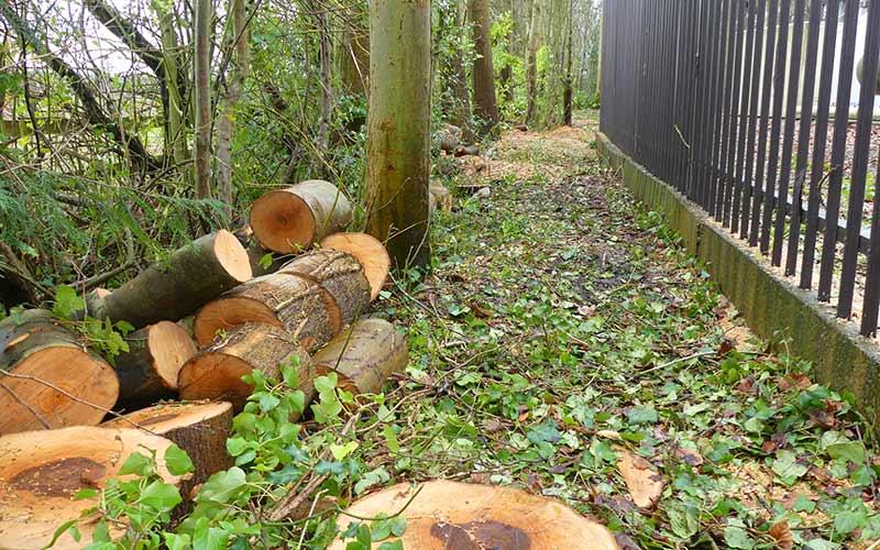 chopped-tree
