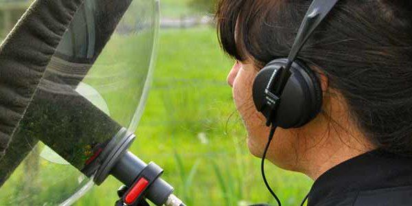 listening-birds-featured