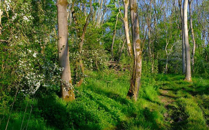 Acient Woodland