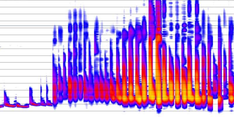 How to interpret your bat surveys
